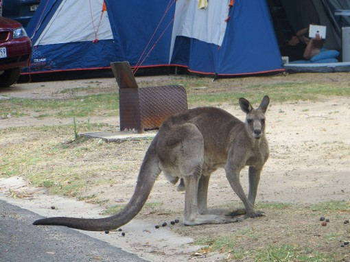 Invité surprise au camping