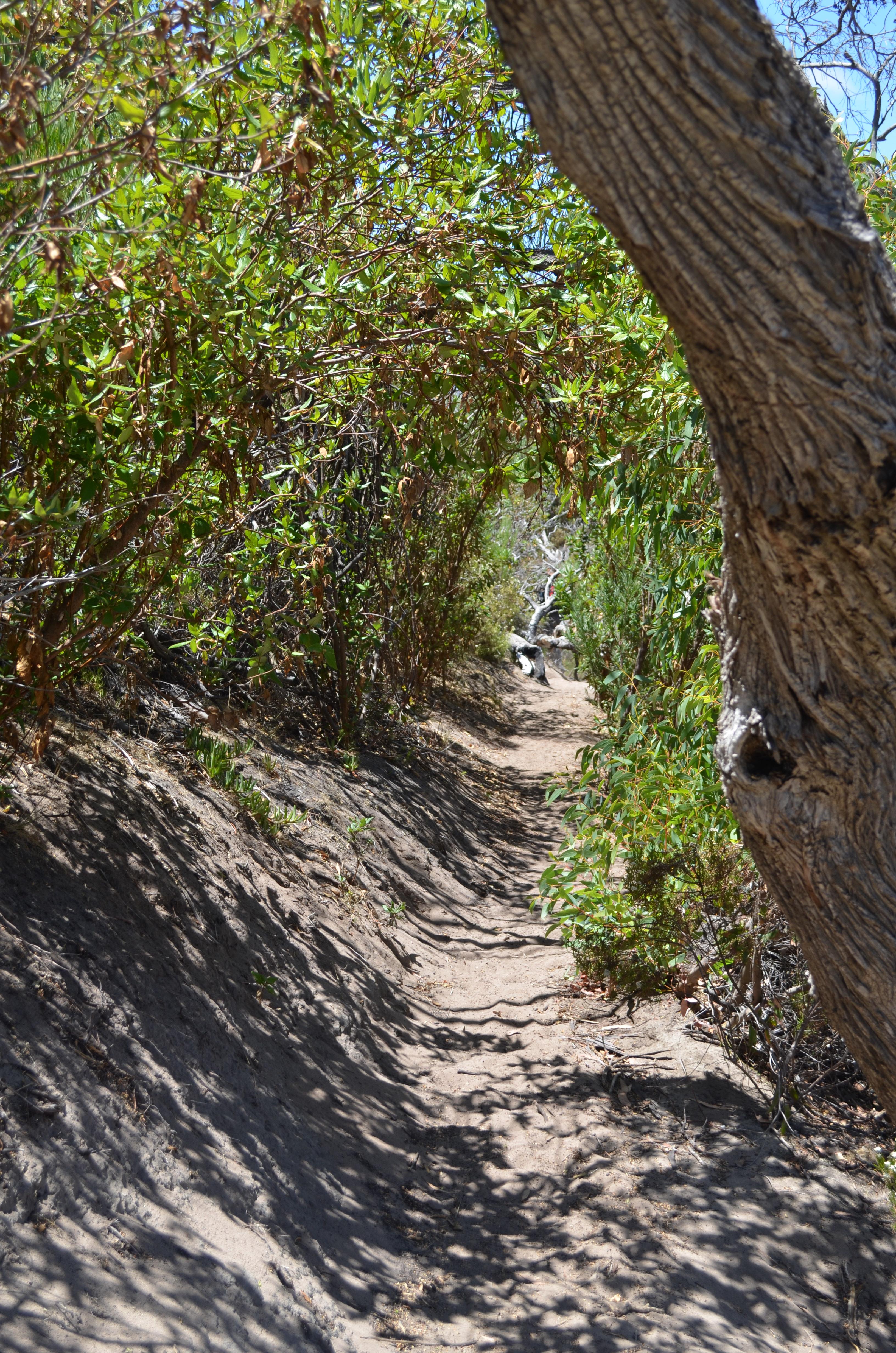 Chemin de randonnée au cœur du Flinders Chase National Park
